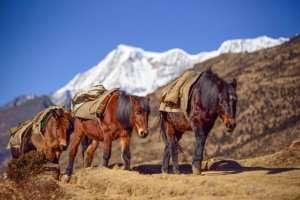 Wycieczka do Bhutanu
