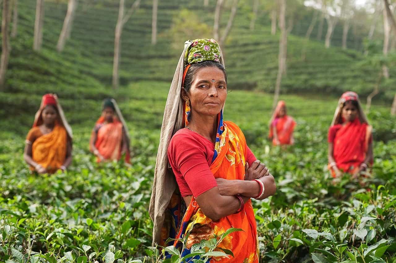 Ciekawostki o Indiach: herbata