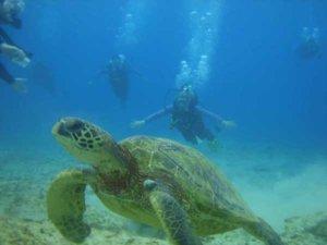 Nurkowanie na Hawajach