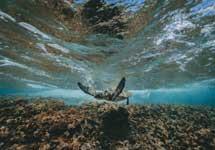 Hawaje - Zatoka Hanuma