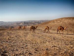 Wycieczka po pustyni - Wakacje w Izraelu