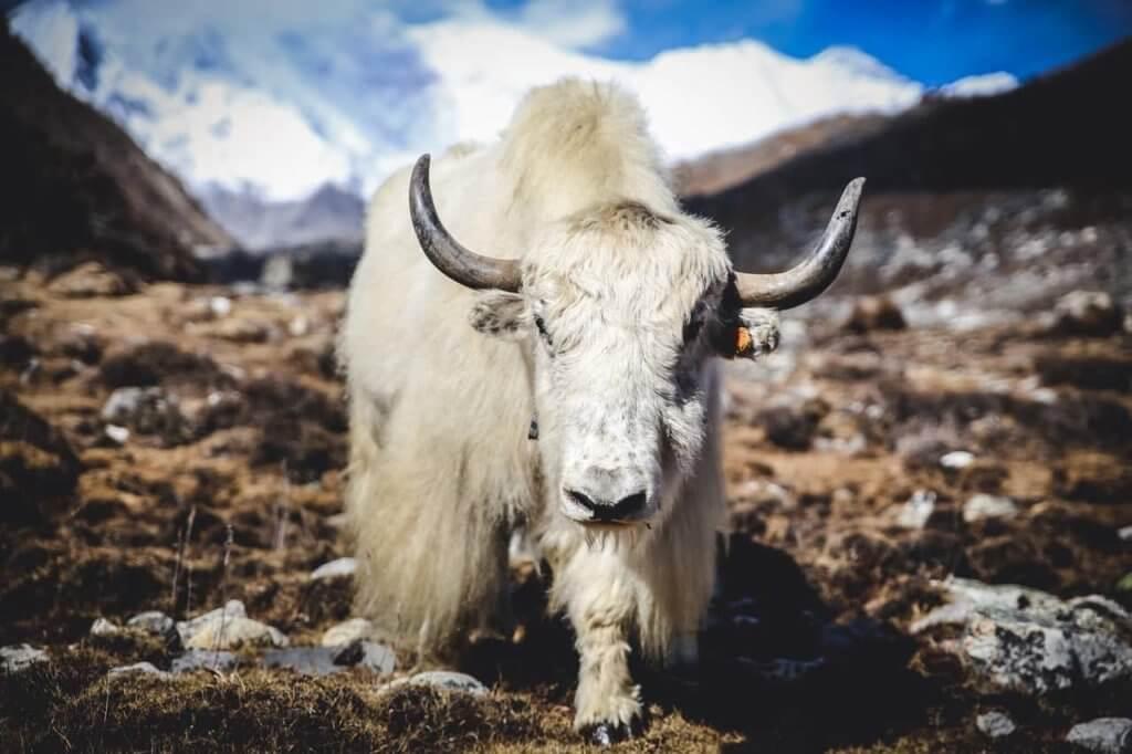 Jak w Tybecie