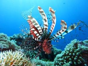 Rafa koralowa u wybrzeża Malezji