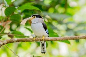Ptaki często spotykane podczas wycieczki