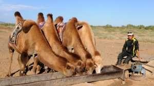 Wycieczka do Mongolii - Pustynia w Mongolii