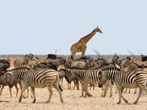 Namibia - wycieczka objazdowa