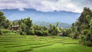 Wycieczka na pola ryzowe w Tajlandii