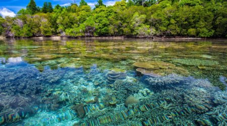 Rafa koralowa - indonezja