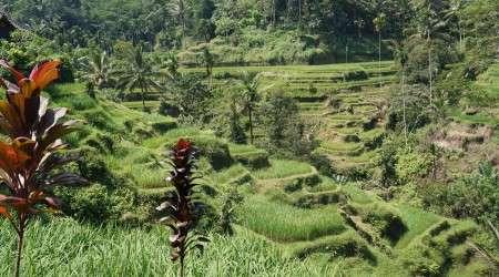 Indonezja - Wyspy Korzenne – Smak, który odmienił oblicze świata