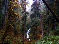 USA - las deszczowy