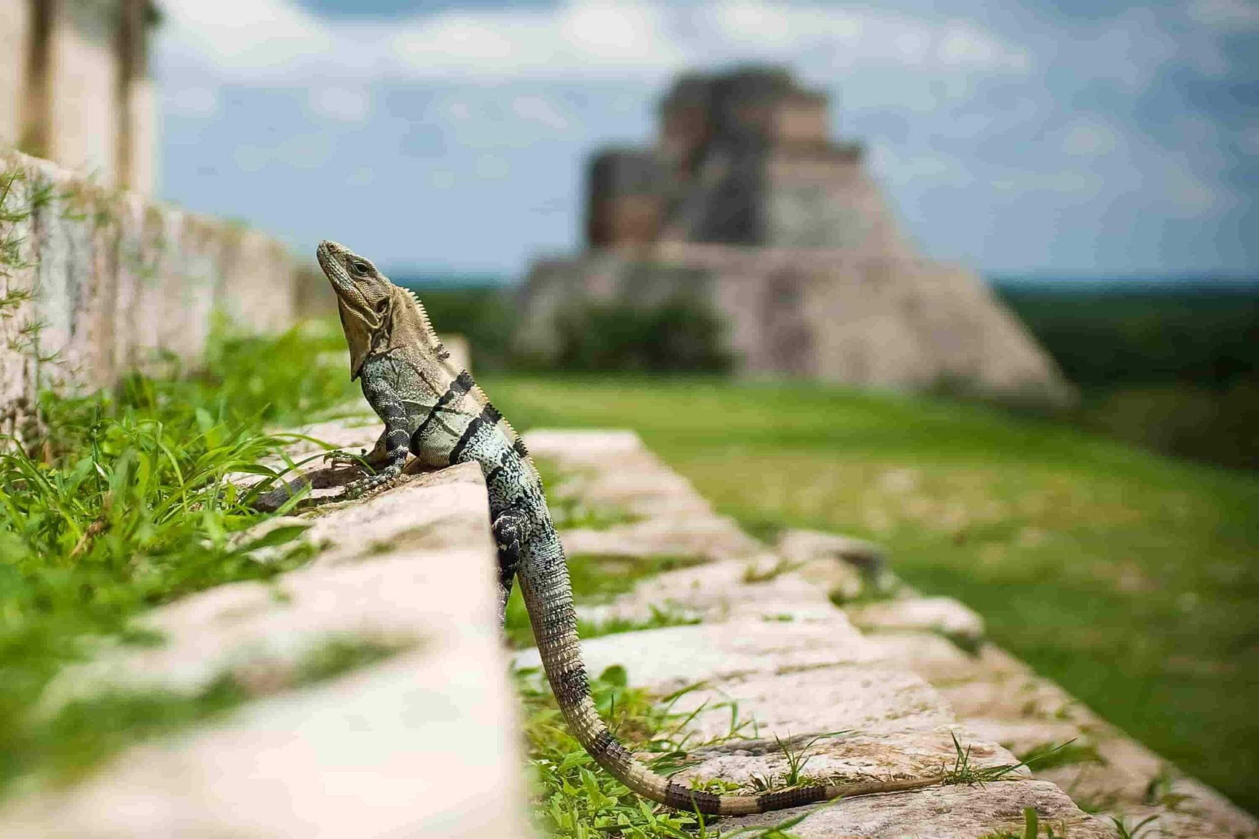 Wycieczki do Meksyku