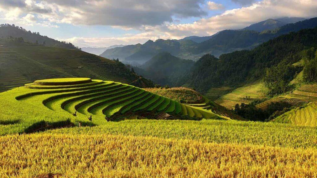 Wietnam - rolnictwo