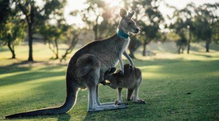 Wycieczki do Australii