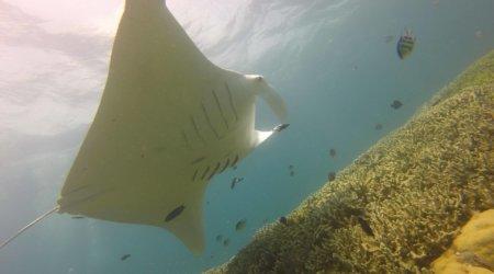 Zdjęcia z wycieczki do Mikronezji